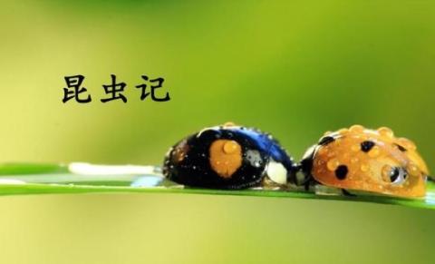 昆虫记圣甲虫主要内容