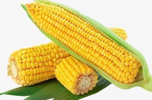 2021年玉米价格最新行情走势分析 玉米今年还能涨价吗?